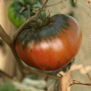 Микроэлементы в томате