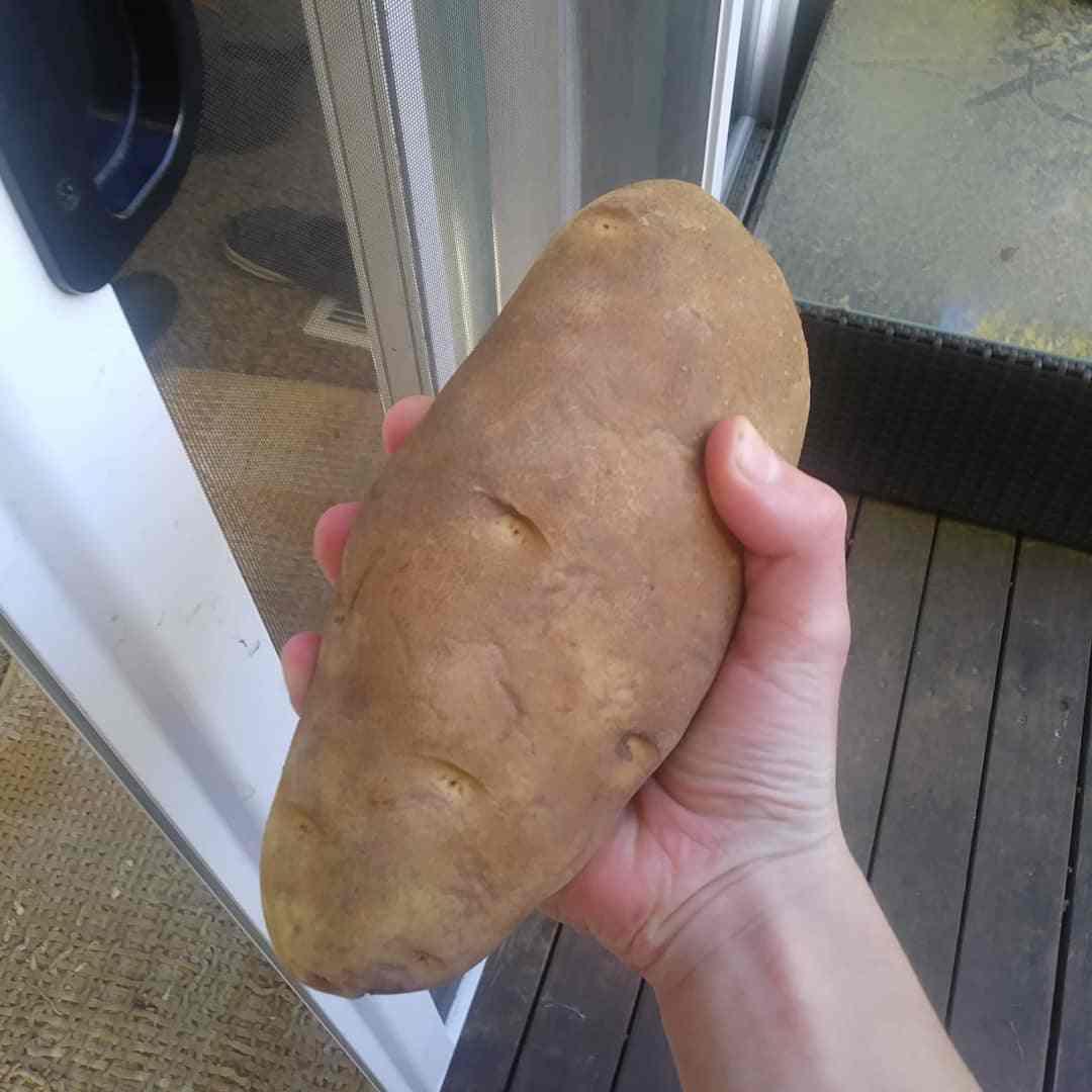 Семенной картофель в Ставрополе